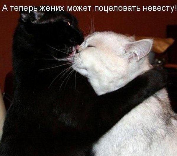 Прикольные фотки животных с подписями:-) (22 фото)