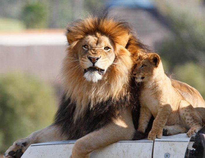 Позитивно про львов (17 фото)