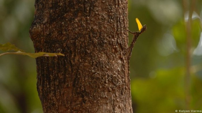 Попробуйте найти ящерицу (3 фото)