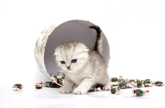 Котятки (15 фото)