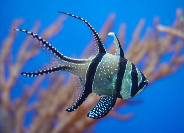 Красивые фотографии обитателей океана! (16 фото)