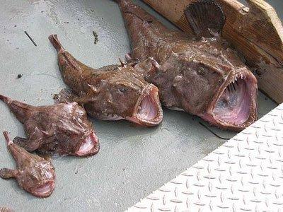 Недецкая рыбалка! (9 фото)