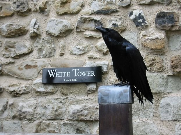 Черно-белые зверушки (45 фото)