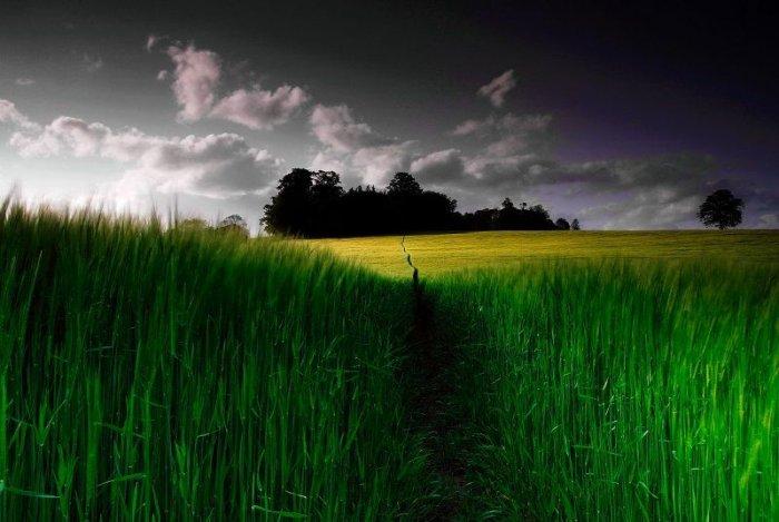 Красивейшие фотографии природы! (15 фото)