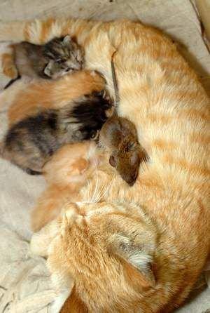 Кот и мыши (5 фото)