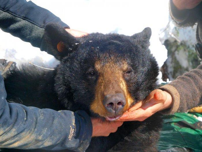 Не буди спящего медведя (26 фото)