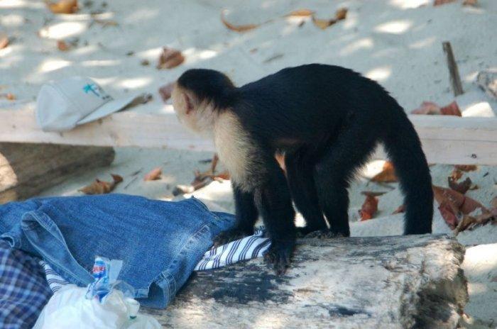 Проворная обезьянка:-) (5 фото)