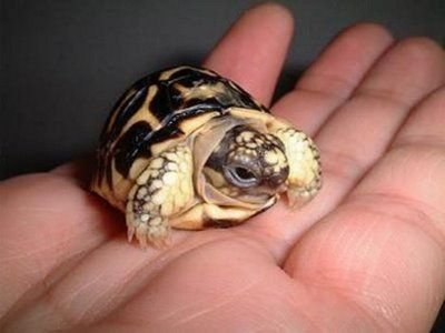 Рождение черепашки (5 фото)