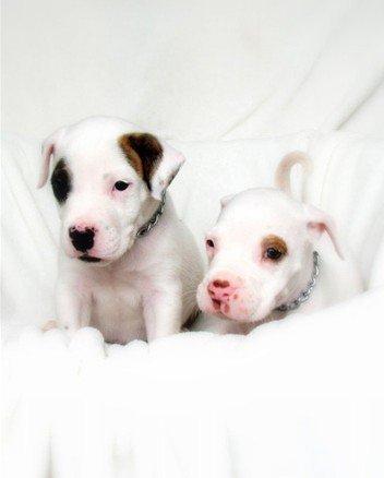 Собачки (15 фото)