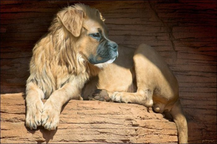 Чудеса фотошопа. Животные (49 фото)