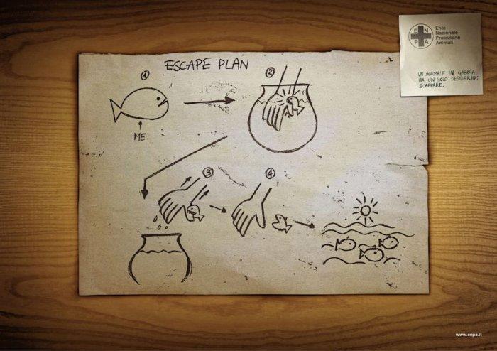 План к побегу (3 фото)