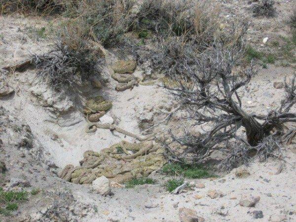 Змеиное логово (5 фото)