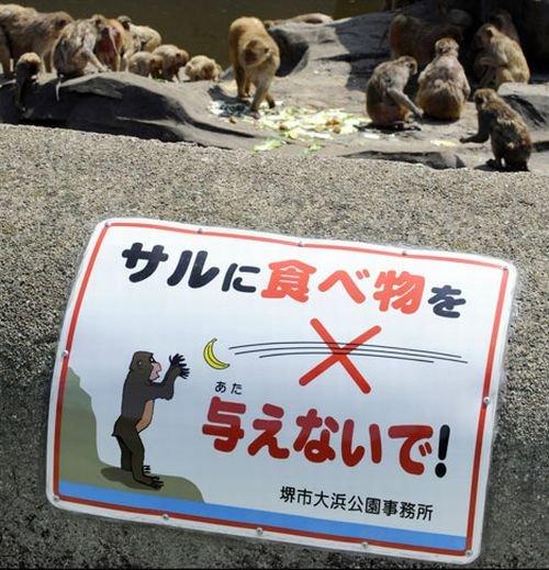 Почему нельзя кормить мартышек? (4 фото)