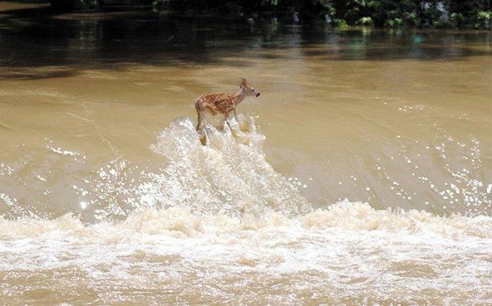Немного о воде (17 фото)