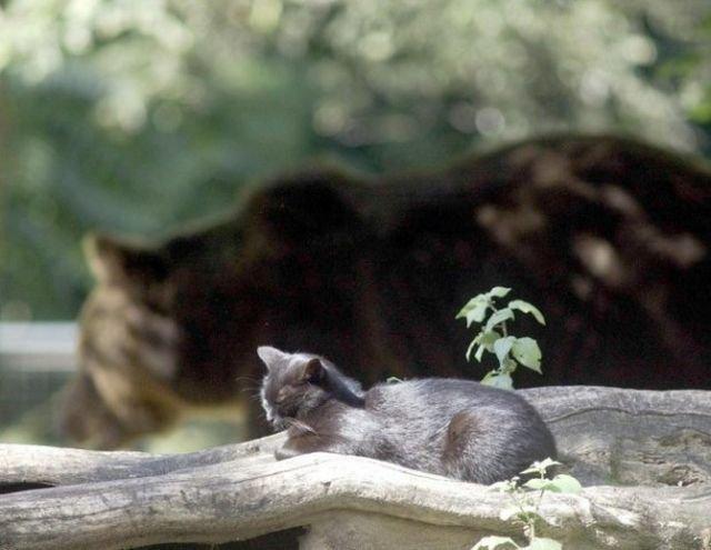 Дружба медведа и кота (4 фото)