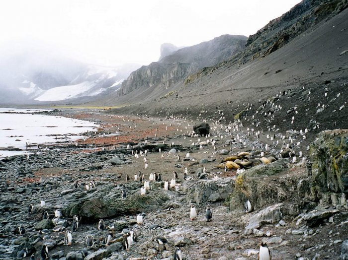 Фотографии антарктиды (7 фото)