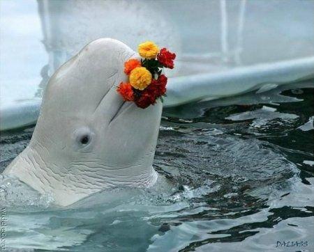 Суперпозитивный дельфин! (53 фото)