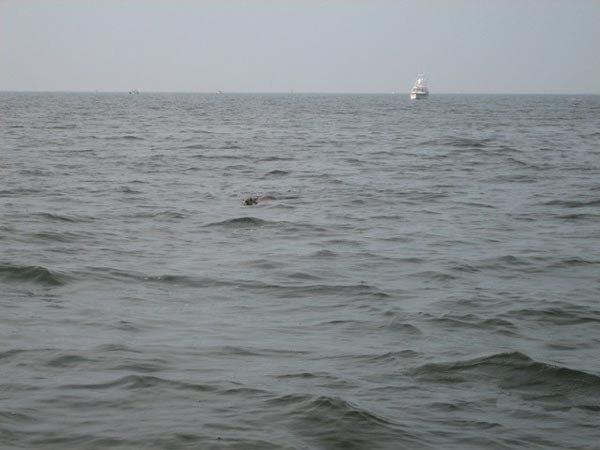 Что это плавает в море? (5 фото)