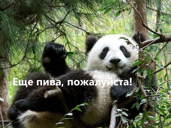 ПЯТНИЦА! (17 фото)