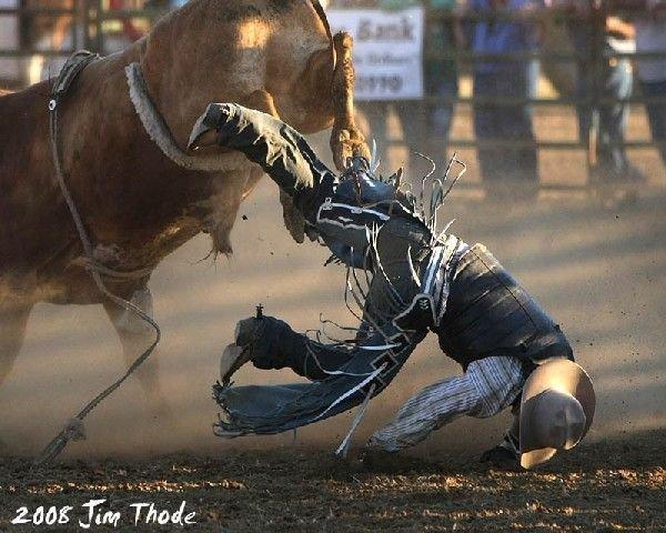 С быками лучше не шутить (16 фото)