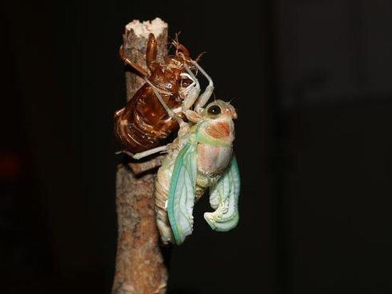 Что станет с этим жуком? (6 фото)
