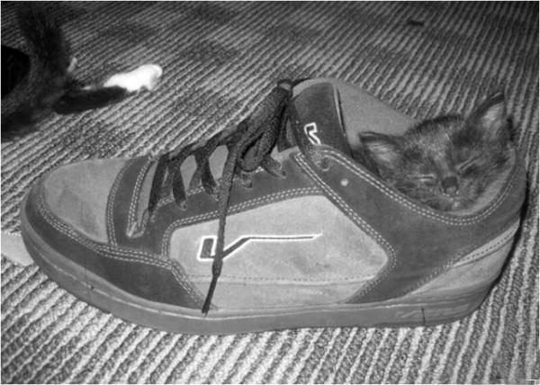 Где спят коты (15 фото)