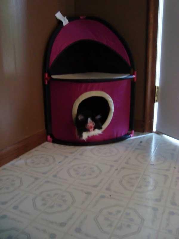 Бедный котик... (9 фото)