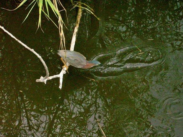 Любопытная птичка (4 фото)