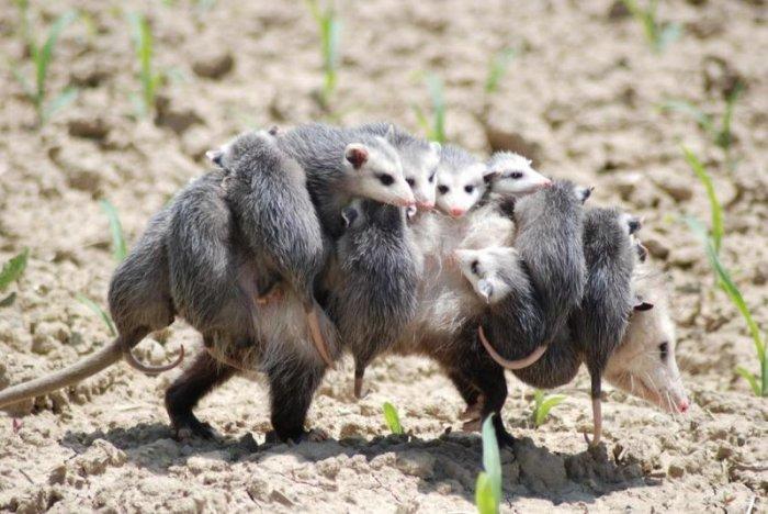 Животные (15 фото)