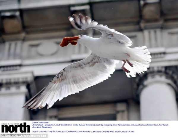 Атака с воздуха (5 фото)