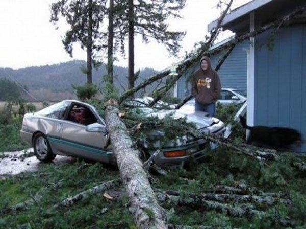 Почему дебилам нельзя валить деревья (7 фото)