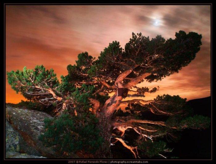 Красота природы (43 фото)
