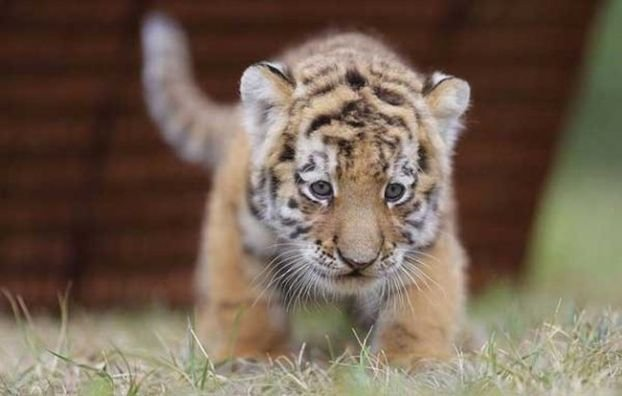 Большие котята (20 фото)