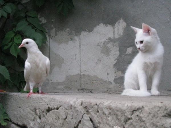 Кошаки и птичка (5 фото)