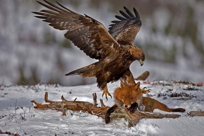Классные фотографии зверушек (16 фото)
