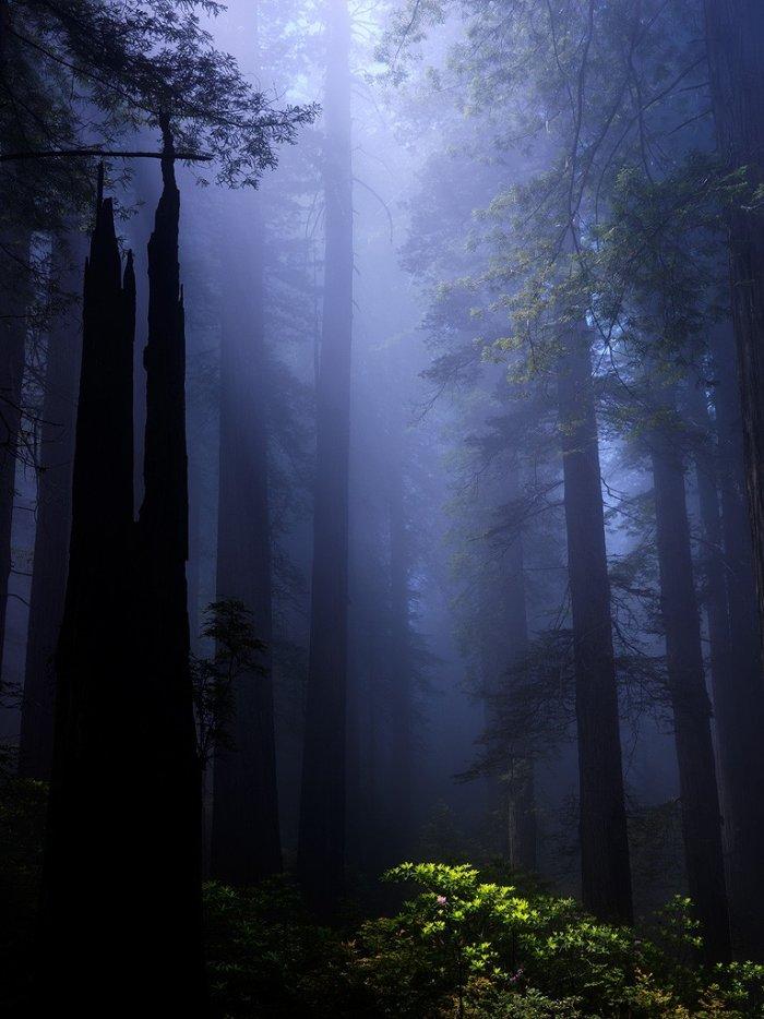Фотографии природы (15 фото)