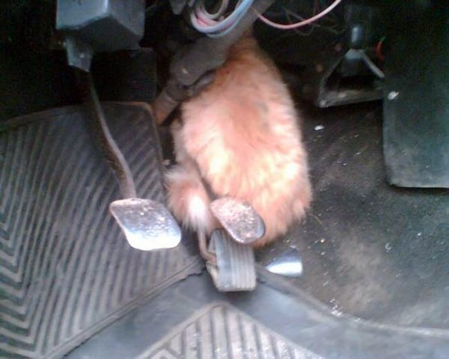 За животными в машине нужно следить (10 фото)