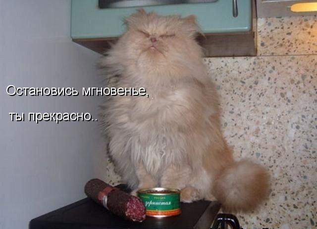 Фотографии животных с подписями (12 фото)
