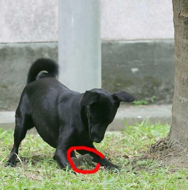 Собака против белки (5 фото)
