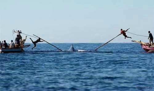 Как охотятся на китов (5 фото)