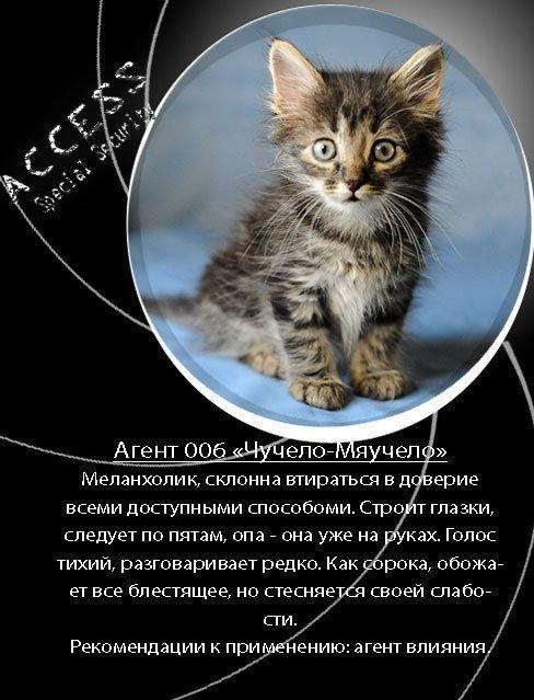Как отдать котят в хорошие руки (12 фото)