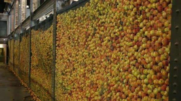 Картины из яблок (30 фото)