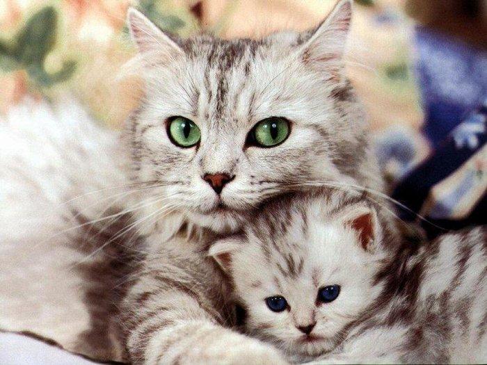 Зверушки с детишками (15 фото)