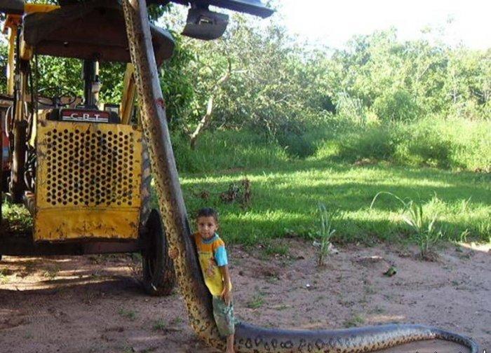 Поймали змеюку (10 фото)