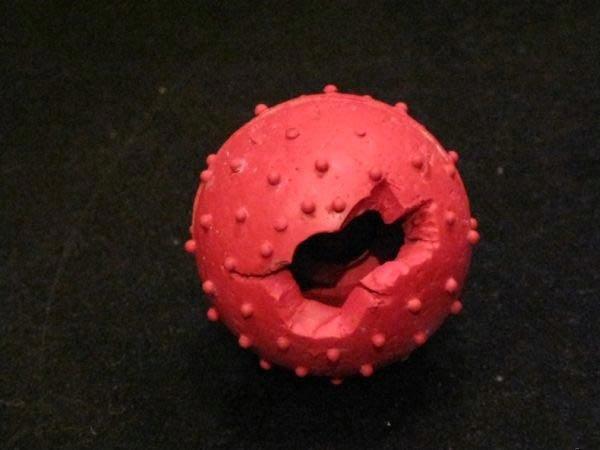 Собака разгрызла мячик (3 фото)