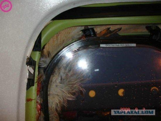 Птичка залетела в гости (6 фото)