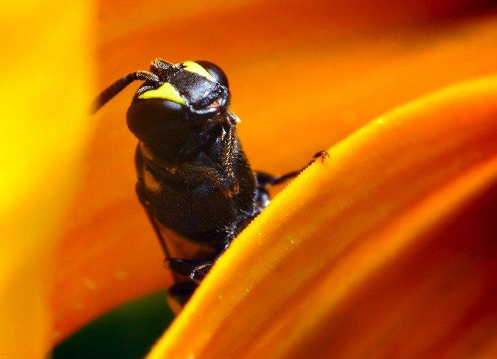 Макрофотографии насекомых (40 фото)