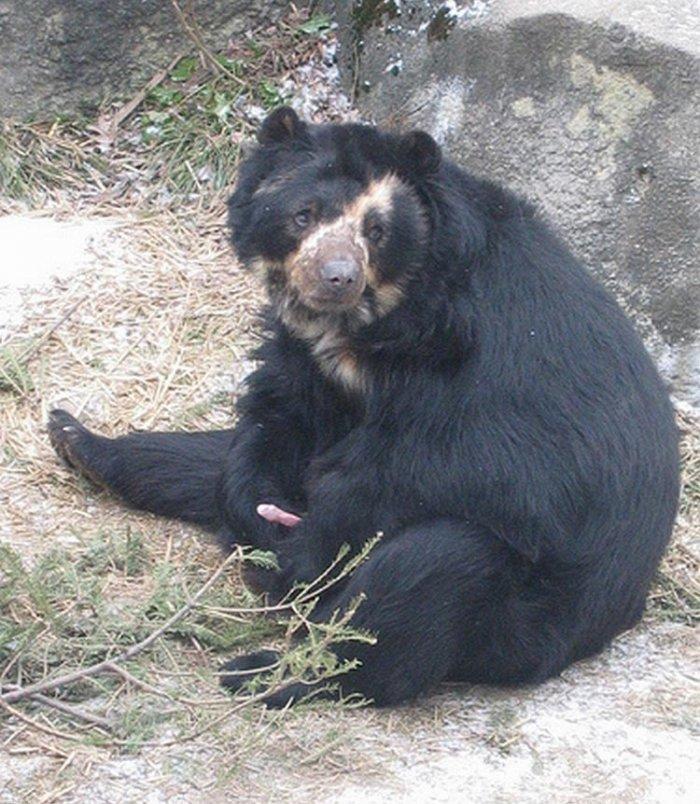 Одинокий медведь (5 фото)