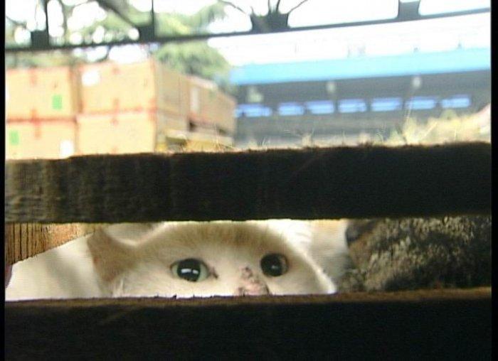 Бедные кошки (10 фото)