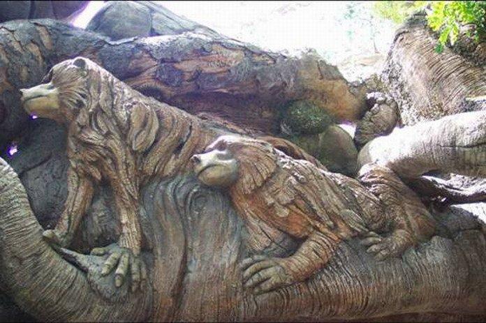 Необычное дерево (16 фото)